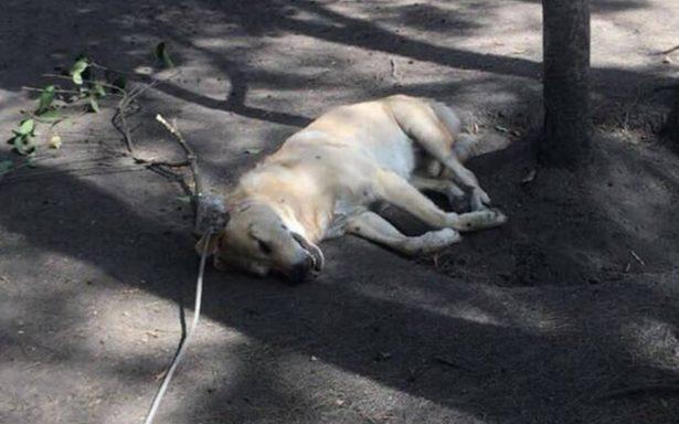 Atroz ahorcamiento de un perro indigna en redes