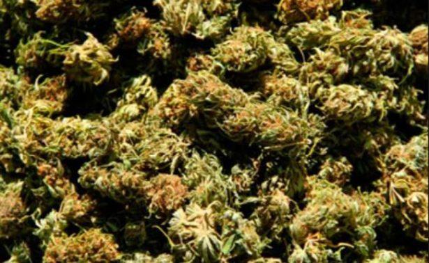 Decomisan 5 kg de marihuana en San Luis Potosí