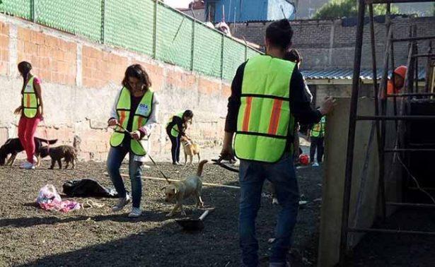 Rescatan a perros abandonados por peregrinos en La Villa