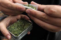 Abaratan la marihuana en Holanda