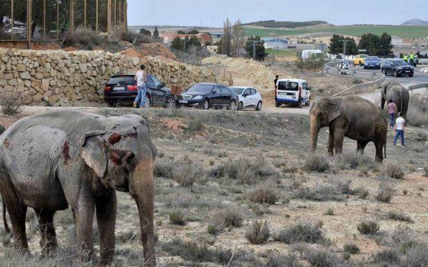 Vuelca camión de circo cargado de elefantes en España, hay uno muerto