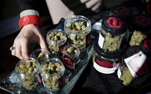 Tráfico ilegal de marihuana se da ahora de norte a sur