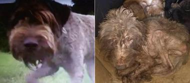 Buscaban hogar y solo encontraron tortura… perros rescatados del sismo sufren en 'santuario'
