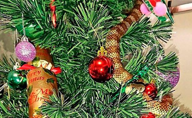 Serpiente quería pasar como arreglo navideño