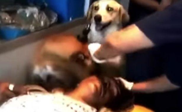Perros auxilian a su dueño herido y lo acompañan hasta hospital