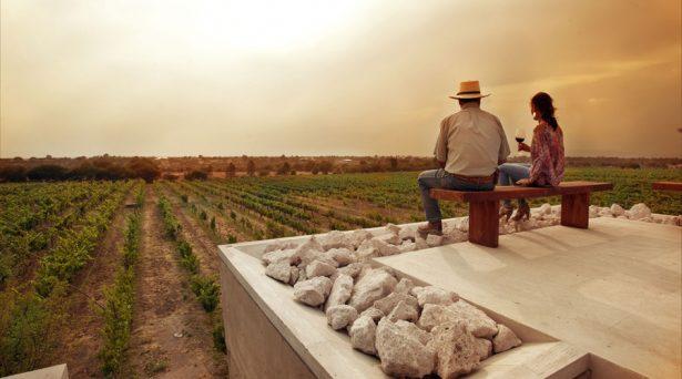 Se diversifica producción de vinos en Guanajuato