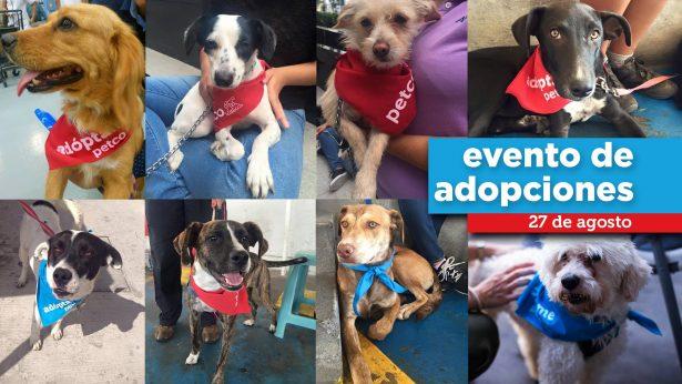 Invita Animare a la adopción de mascotas