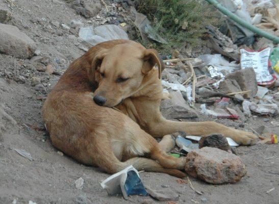 Omite la Secretaría de Salud de Guanajuato a León en esterilización de mascotas