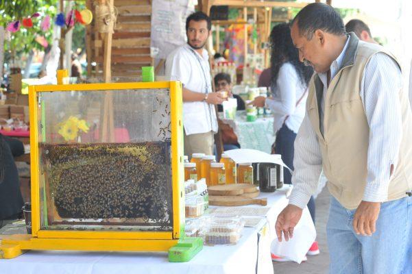 Exportan miel guanajuatense a Francia, Italia y Alemania