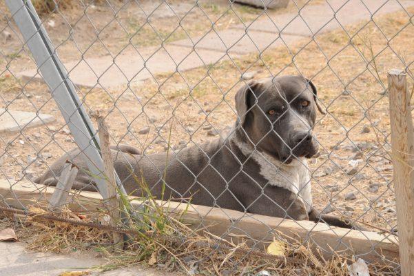 Piden denunciar maltrato animal en el Ministerio Público