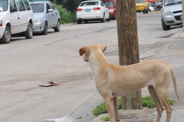 Propondrán penas de cárcel por crímenes contra animales
