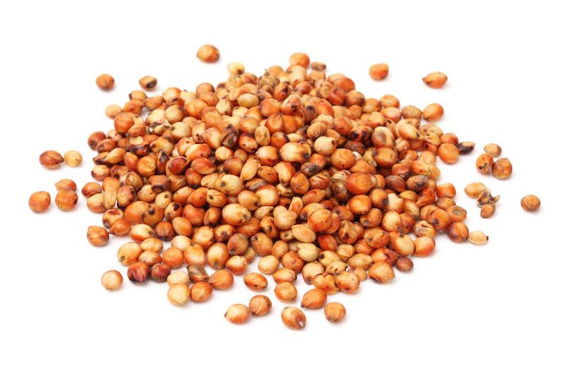 06 sorgo grano