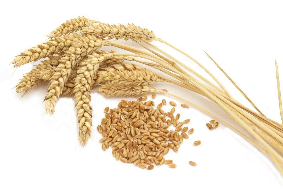 10 trigo grano