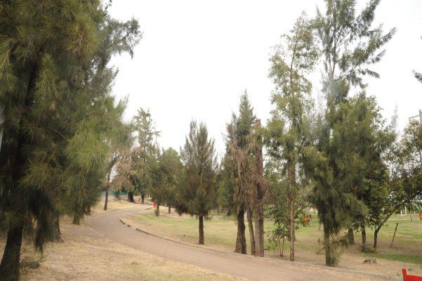 Consultan autoridades a arboristas certificados