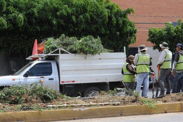 Dirección de Gestión Ambiental recibe más solicitudes para tala de árboles