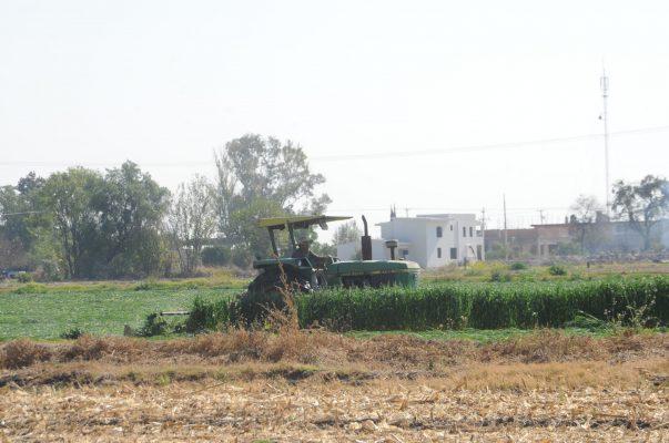 Aprueban reglamento para Desarrollo Rural Sustentable