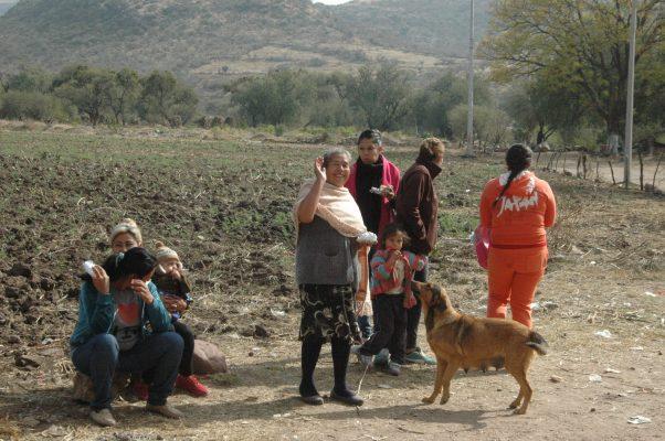 Transmiten mascotas enfermedades y virus