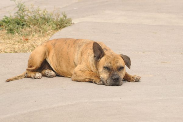 Rescatan animales callejeros, pocos logran seguir viviendo