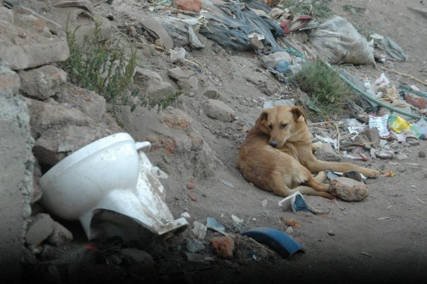 Al menos 180 mil perros que se encuentran en situación de calle en León