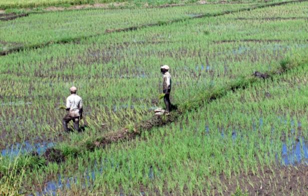 Impactan lluvias a la zona rural