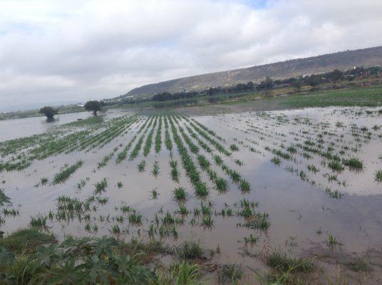 Van 658 hectáreas de cultivos perdidas por las fuertes lluvias