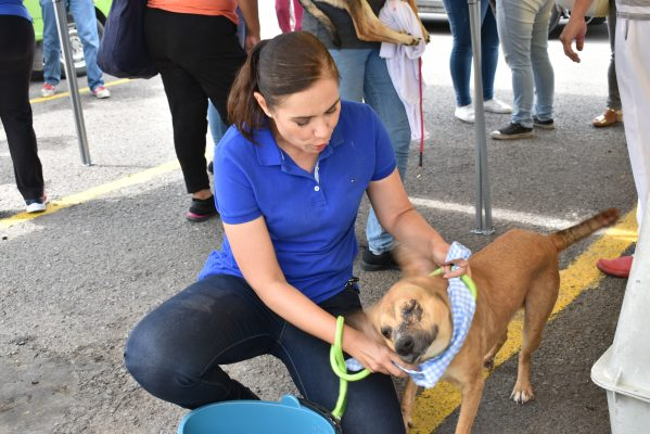 """""""Promoverá Gutiérrez Sanciones más severas contra el maltrato animal"""""""