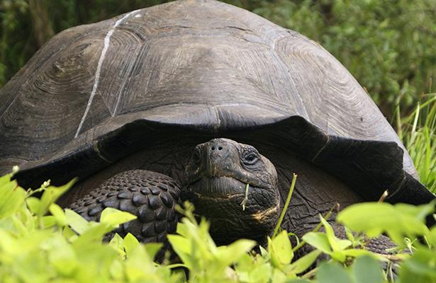 ¡Increíble! Desaparece misteriosamente una tortuga gigante de zoológico