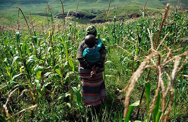 En 2050 disminuirá en 20% la disponibilidad de tierra arable por persona en el mundo