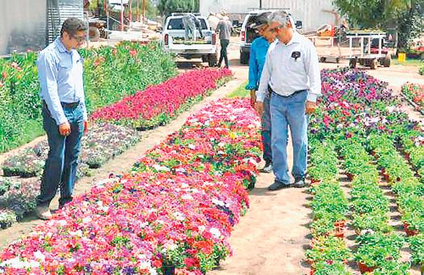 Invierten 75 mdp floricultores del Estado  de México por temporada