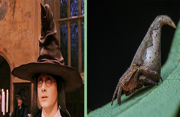 Bautizan nueva especie  de araña en homenaje  a Harry Potter