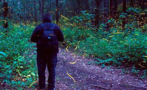 Descubre el avistamiento de luciérnagas en Nanacamilpa