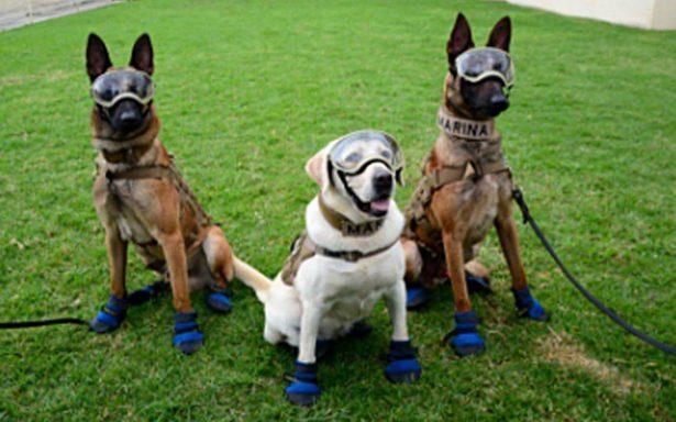 ¡Fridamanía! Convocan a tomarse una fotografía con Frida y los agentes caninos