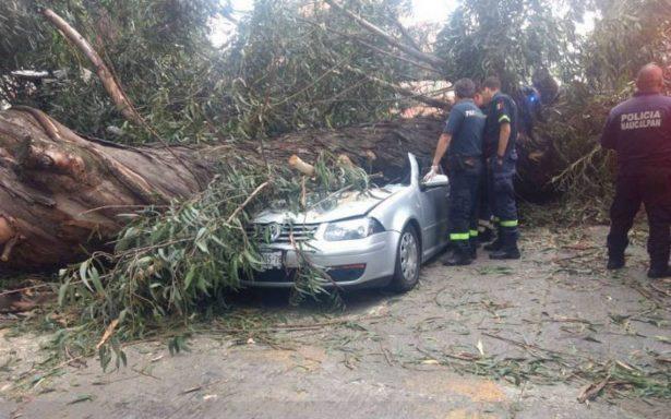 Cae árbol y mata a cuatro que viajaban en auto en Naucalpan