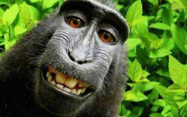 Macaco indonesio que se hizo una selfie es nombrado 'Personalidad del año'