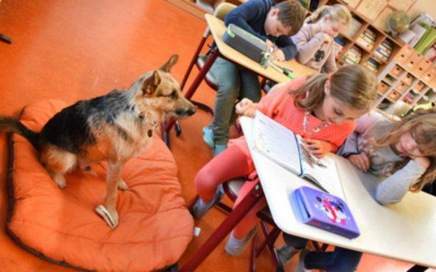 Rudi, el perro que ayuda en el salón de clases y tranquiliza a los alumnos