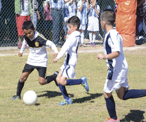 Mazatlán buscará otro título en un Campeonato Estatal
