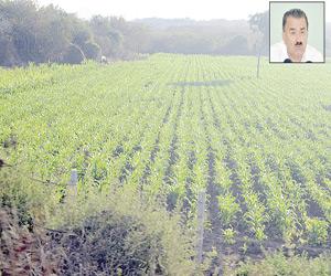 Recortarán presupuesto para Agricultura: Escobar