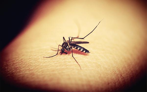 Se disparan casos de dengue en Escuinapa