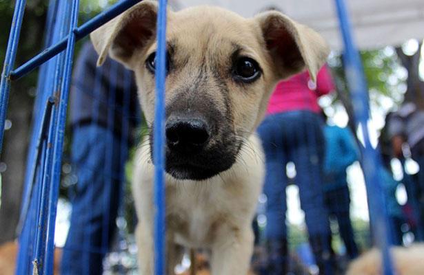 Iniciativa busca concientizar sobre adopción de mascotas