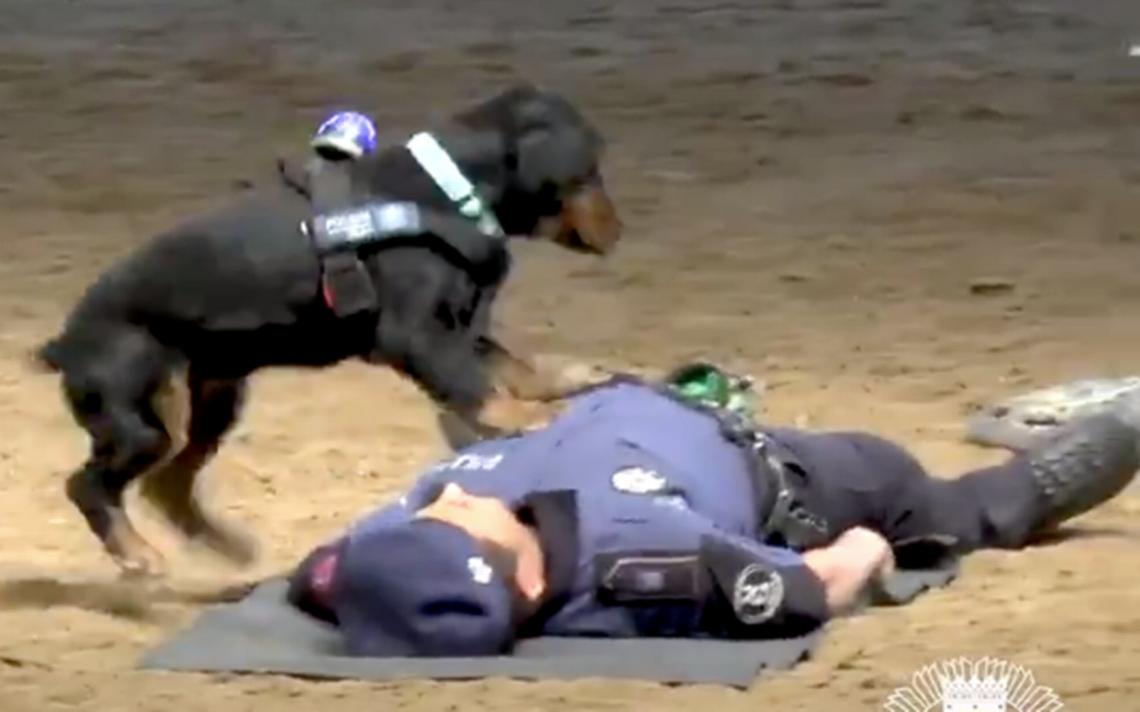 """Este video de un perrito """"reviviendo"""" a un policía te hará morir de ternura"""