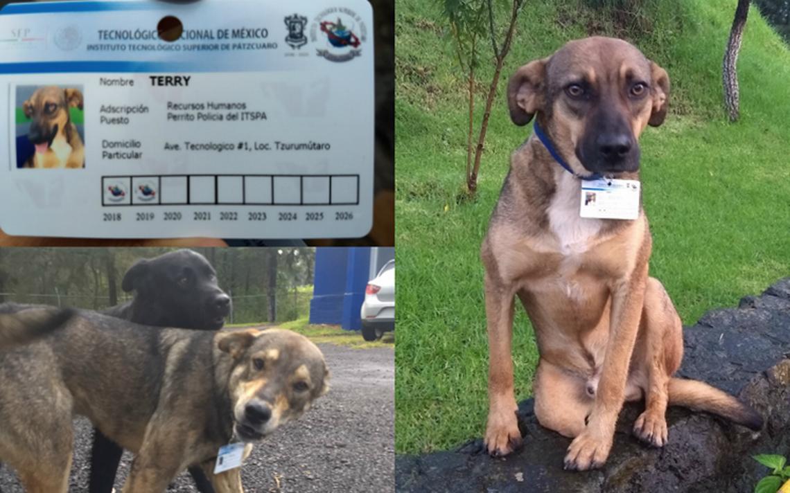 Instituto de Pátzcuaro adopta a perritos y les da trabajo como ¡policías!