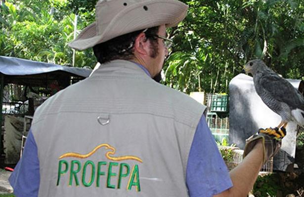 Asegura Profepa 135 ejemplares de vida silvestre en Morelos