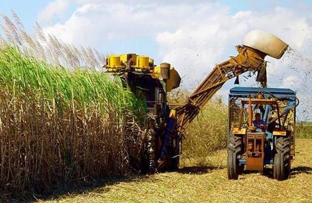 Aumenta 16% exportación agroalimentaria de México a Japón