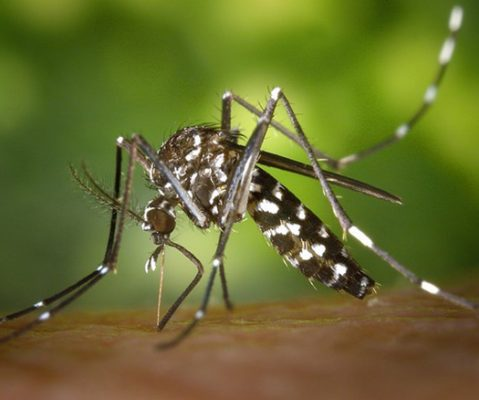 Sector Salud detecta seis casos de chikungunya en Nayarit