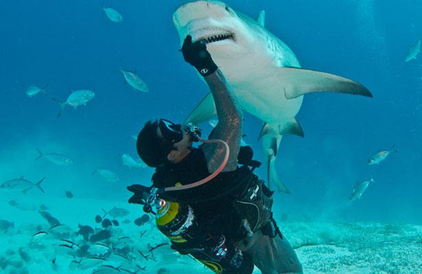 Tiburones de México:  un documental que crea conciencia / Bazar de la Cultura / Juan Amael Vizzuet Olvera