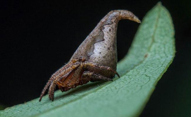 Descubren araña y su nombre es inspirado en la saga — Harry Potter