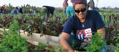 32% de trabajadores autónomos cubanos son mujeres