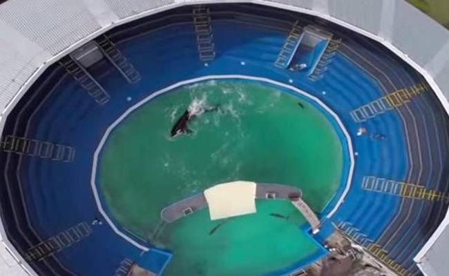 inter-orca-lolita1