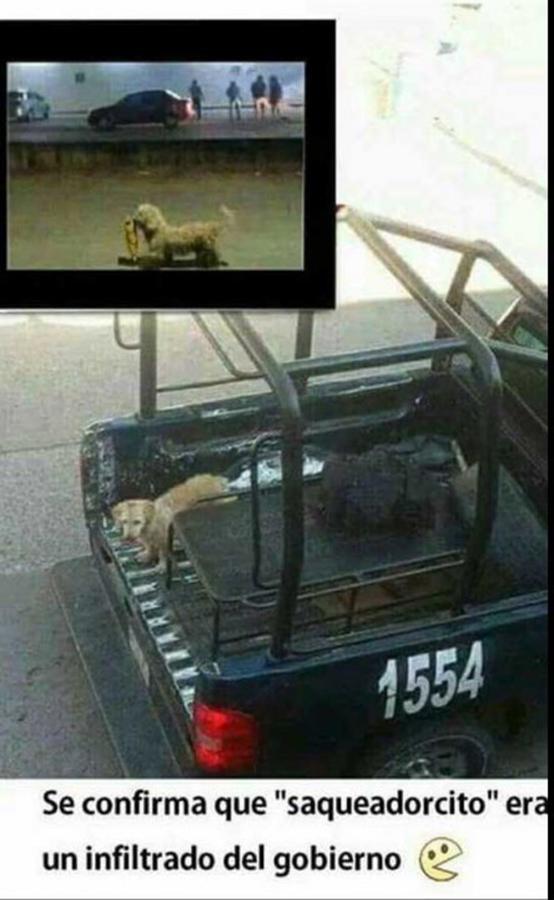 perro_saqueo_1
