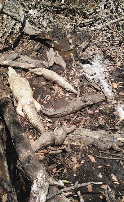 Foto: Comisión Nacional de Áreas Naturales Protegidas
